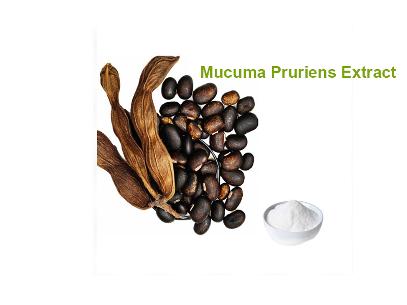 L-Dopa from Mucuna Pruriens Extract