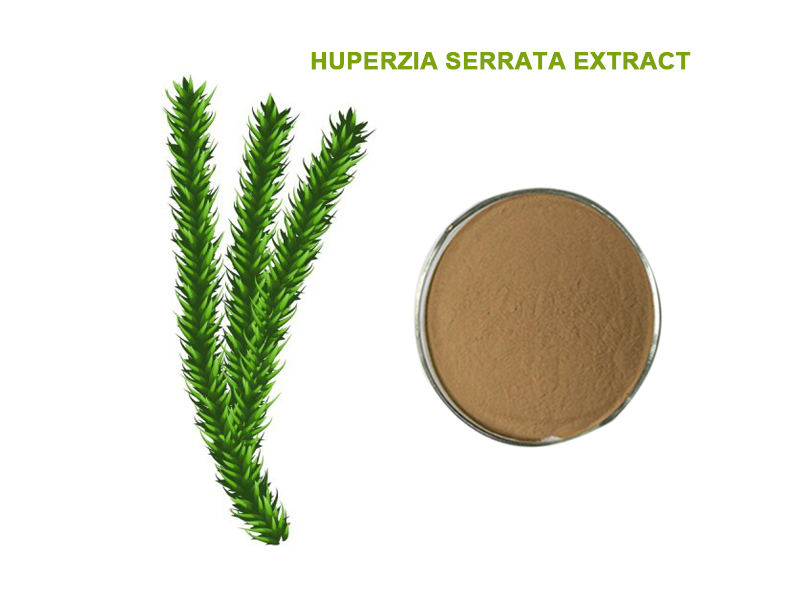 HUPERZIA SERRATA EXTRACT